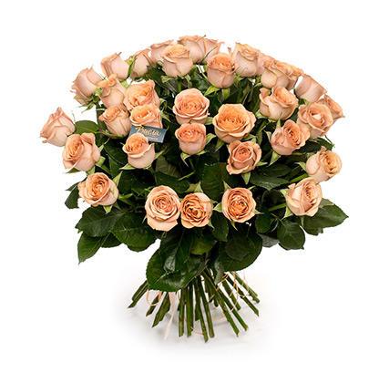 Роза «Каппучино»