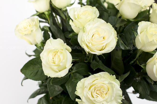 Белые розы. Большой бутон. Эквадор 60 см