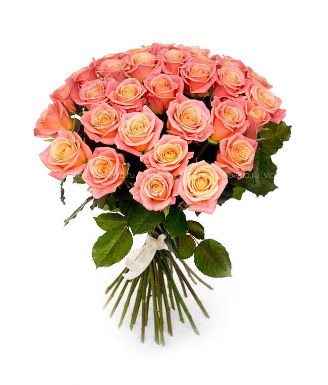 Персиковые розы Россия 50-60 см