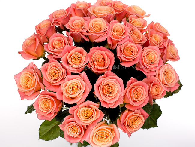 Персиковые розы пр-во Россия.