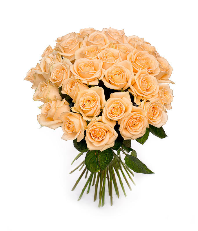 фото кремовые розы