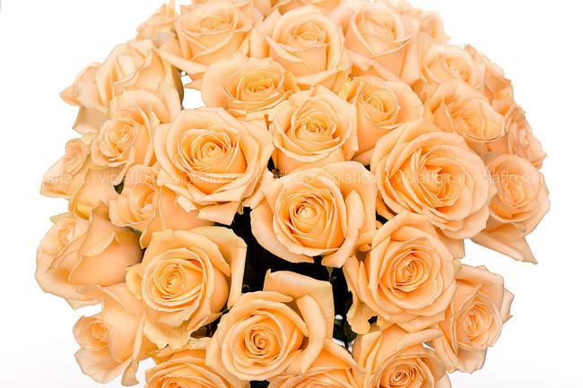 Кремовые розы Россия 50-60 см