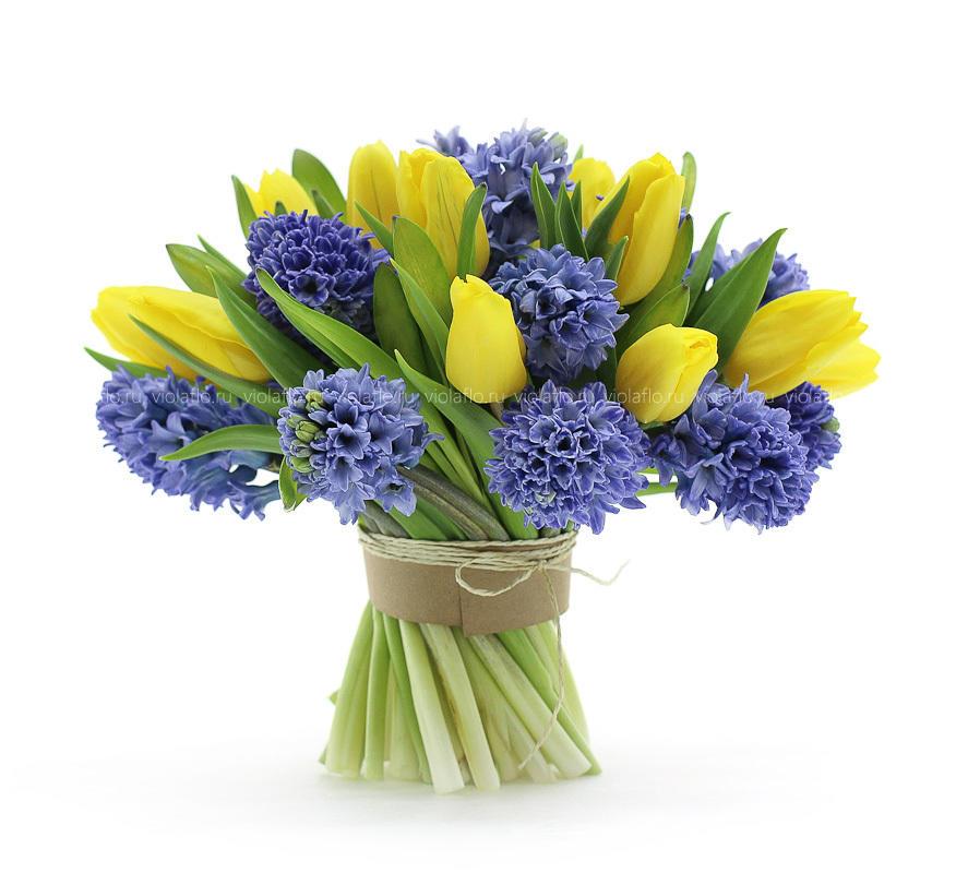 Луковичные цветы в домашних условиях описание и фото от А