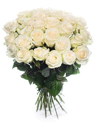 Белые розы Россия 50-60 см
