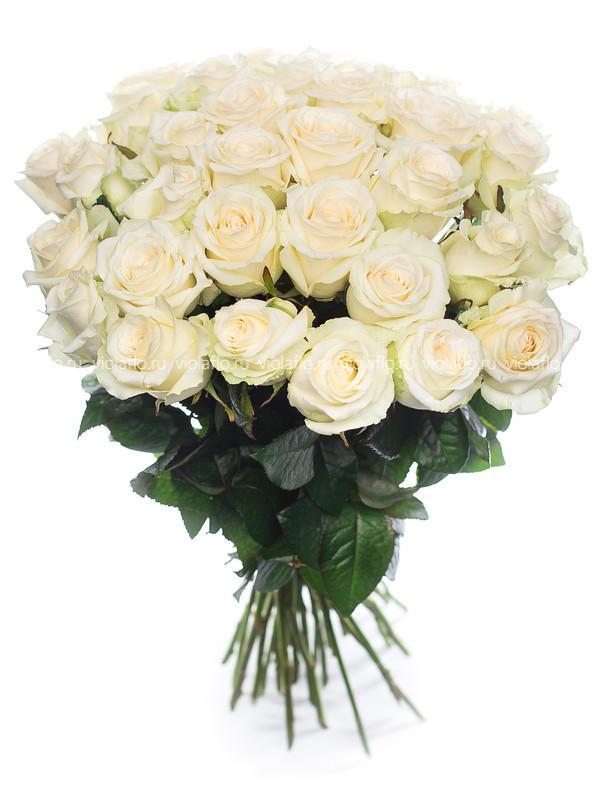 Белые розы пр-во Россия.