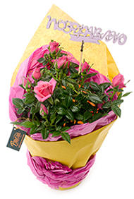 Роза с топпером «Поздравляю»