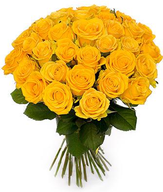 Желтые розы Россия 50-60 см