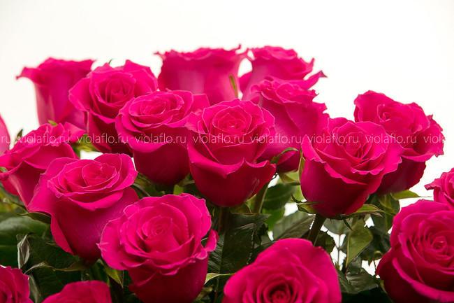 Розы «Готча» длинные 80 см