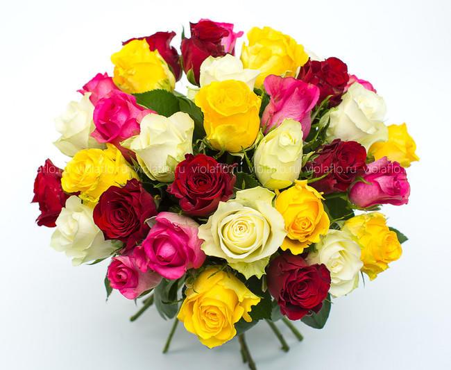Розы кения микс 40см
