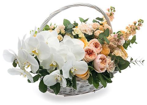 Корзина «Нежная орхидея»