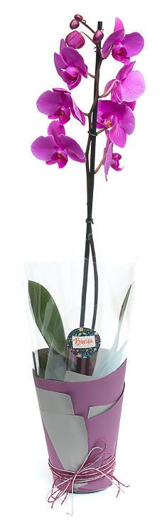 Орхидея V.3
