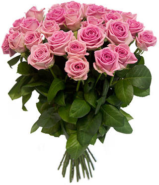 Розы «Аква» пр-во Россия.