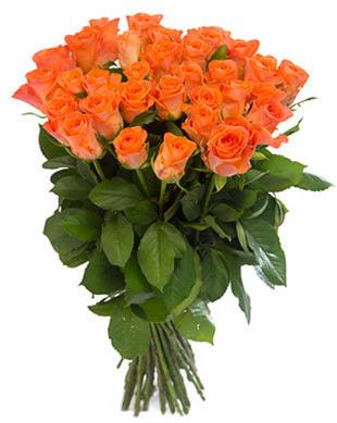 Коралловые розы Россия 50-60 см